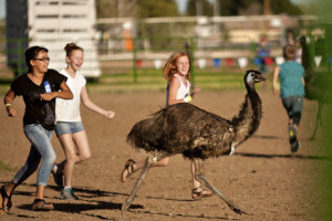 Chandler Ostrich Festival 2015